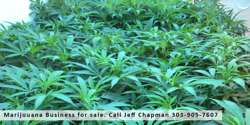 marijuana business for sale colorado